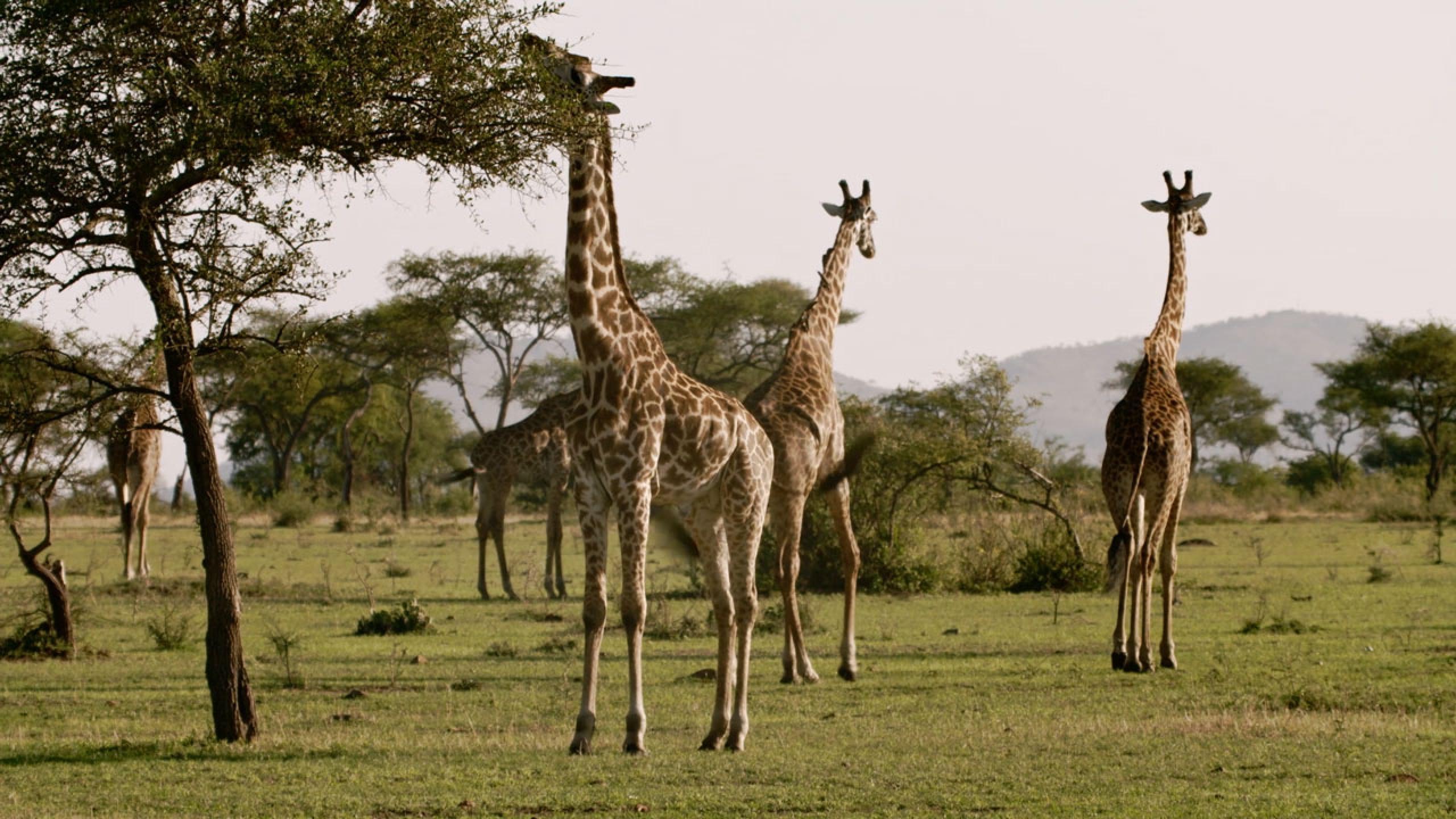 BMZ - Biodiversität in Tansania